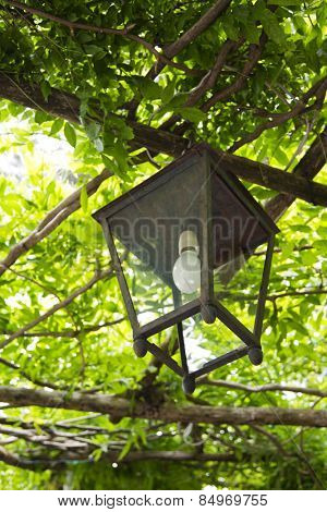 Lantern hanging on a tree, Ravello, Amalfi Coast, Salerno, Campania, Italy