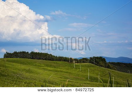 Tress on a landscape, Volterra, Province of Pisa, Tuscany, Italy