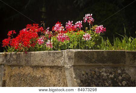 Flowers in a garden, Villa Cimbrone, Ravello, Province of Salerno, Campania, Italy
