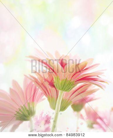 Digital Painting Of  Gerbera Flowers