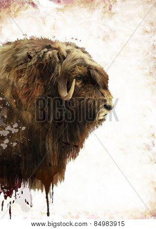 Digital Painting Of  Muskox Head