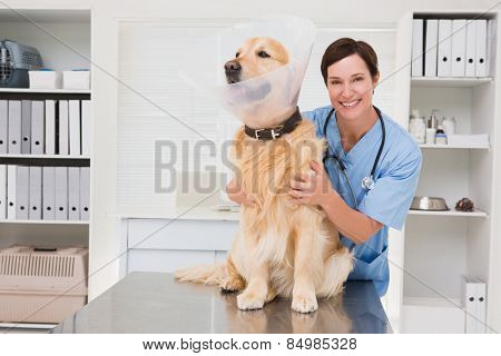 Smiling veterinarian examining a cute dog in medical office