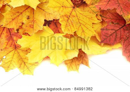 Maple-leaf leaves composition