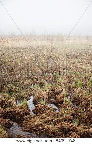 Bog Landscape With Fog