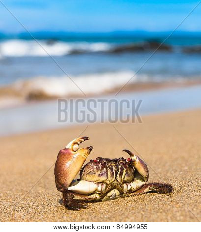 Cute Animal By the Sea