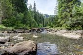 foto of coniferous forest  - Mountain stream surrounded by coniferous forest - JPG