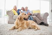 picture of family bonding  - Golden Retriever on rug with family in background at home - JPG