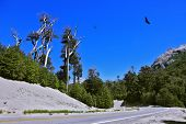 picture of mountain-ash  - Road in the mountains of Patagonia - JPG
