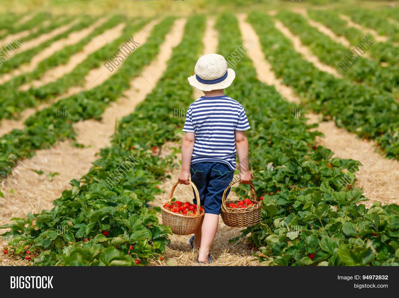 Фото ребенка с урожаем
