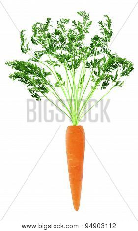 Fresh orange carrot with green stem
