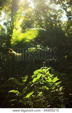 Small plant growing in rainforest