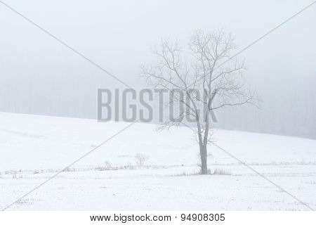 Single Tree in Snow Covered Field on Foggy Morning