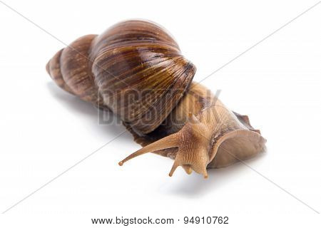 Photo of curious snail