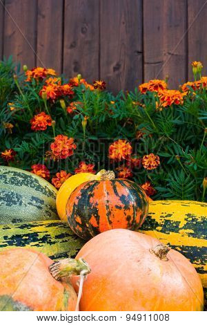 Pumpkins, Marigolds And Wooden Fence