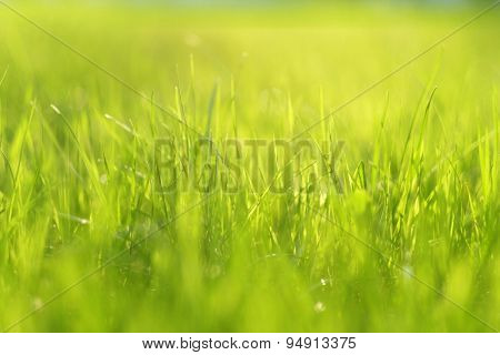 Meadow in sunlight. Shallow depth of field.