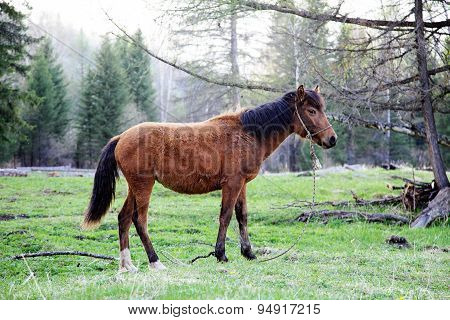 Young Horse Standing On The Grass