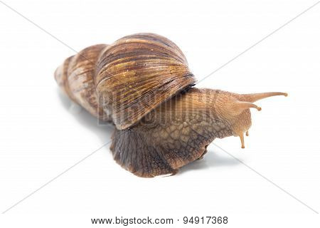 Photo of big snail