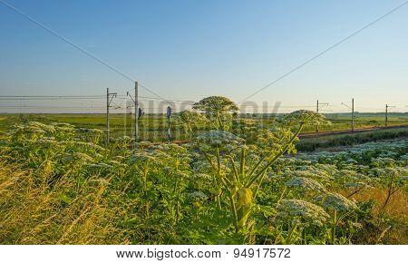 Railroad through a sunny landscape in summer