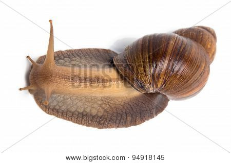 Photo of Achatina on top