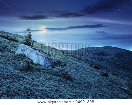 Lonely Conifer Tree And Stone At Night