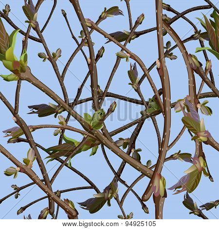 Branches With New Green Shoots Or Sprout And Leaves