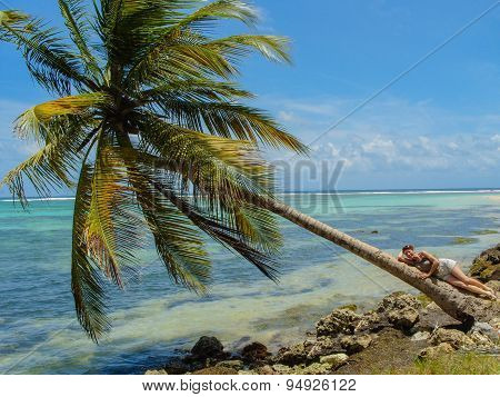 Coconut Tree On The Caribbean Sea In Guadeloupe.
