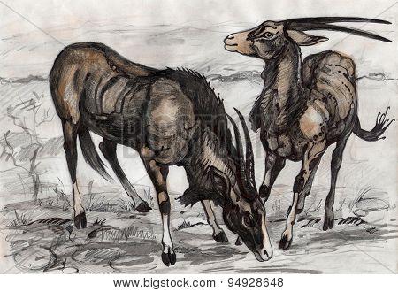 Eland antelopes