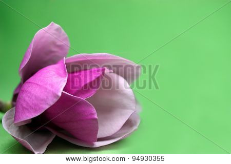 Magnolia On Green Background