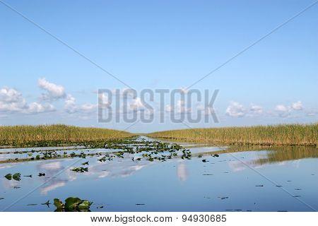 Everglades Pond