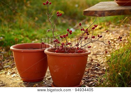 Clay Pot With Berries