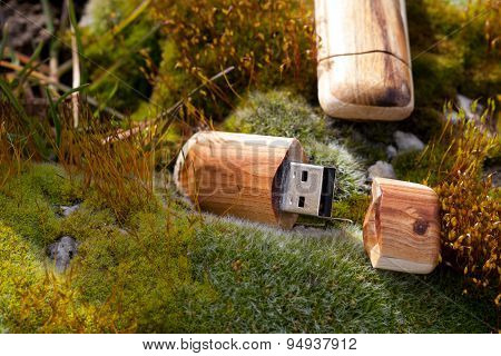 USB flash drives in new special wooden shells cladding, shot on natural moist outdoor macro scene