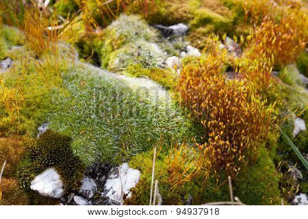 Moss and rocks macro scene