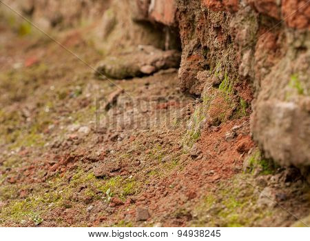 Rotting old red brick wall with green moss