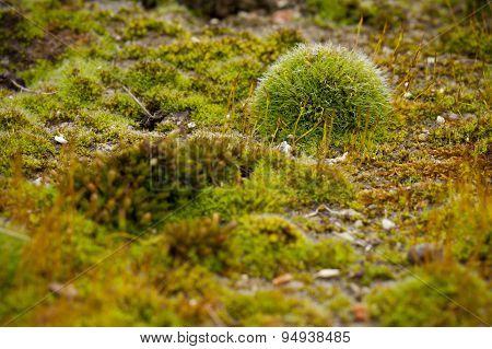 Green moss model-like macro scene