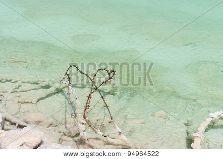 Barbed Wire In The Shallow Waters  Dead Sea