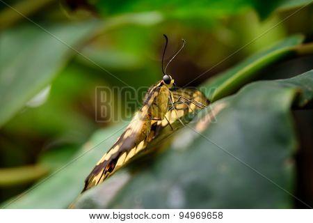 Butterfly Eye Portrait
