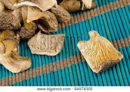 Oyster Mushrooms