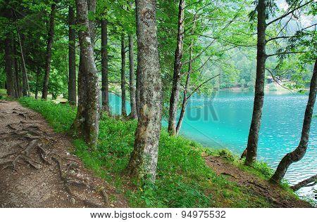 Trees By Lago Di Fusine Superiore