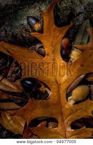 Seasonal Fall Foliage