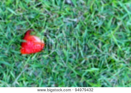 Blur Red Strawberries On Grass