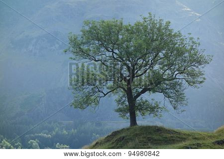 Solitary Tree in Lake District