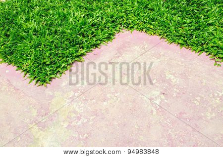 Paving and lawn.
