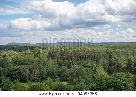 Forest Near Brombachsee