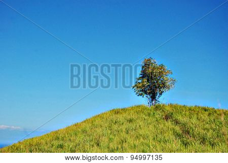 Single Bamboo Plant On Top Of A Hill  Blue Sky As Background - Image Slightly Burred For Background
