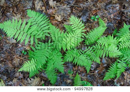 ferns growing on forest  floor
