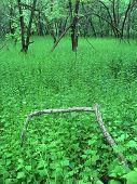 stock photo of winnebago  - Dense understory vegetation covers the forest floor at Blackhawk Springs Forest Preserve in Illinois - JPG