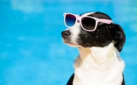 foto of sunbathers  - Funny female dog wearing sunglasses and sunbathing at swimming pool on summer - JPG
