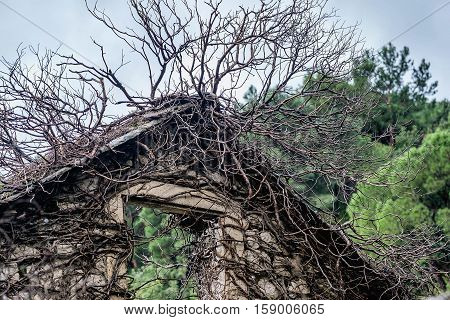 Abandoned stone house covered with tree branches