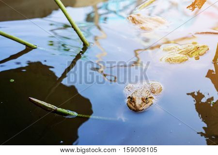 frogs in the pond with the daylight.