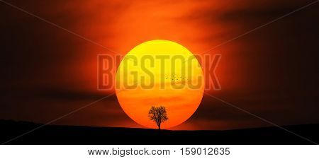 Tree at sunset. Beautiful summer landscape. big sun, tree